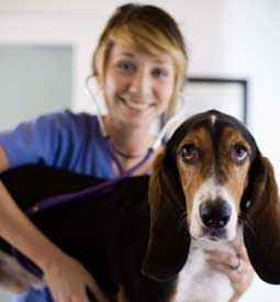 Veterinary Assistant Diploma Program